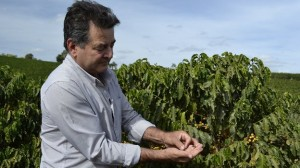 Drought Damages Brazil Coffee Crop