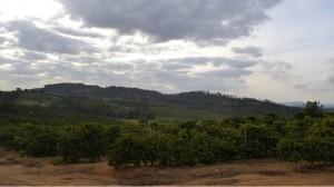 Parched Landscape in Brazil