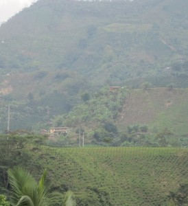 Colombian Coffee in the Valleys and on the Mountain Sides