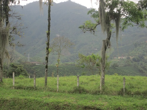Along the Coffee Highway