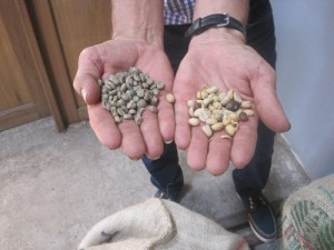 Coffee Beans Before and After Removal of Husk